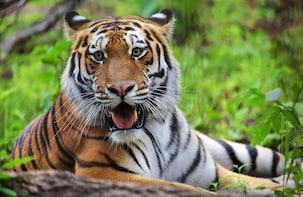 Private Tour: Amazing Safari Park with Amur Tiger Watching