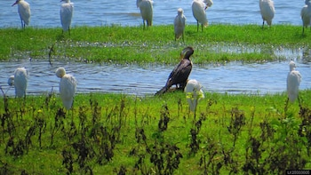 Yala National Park Safari from Hikkaduwa (Private Tour)