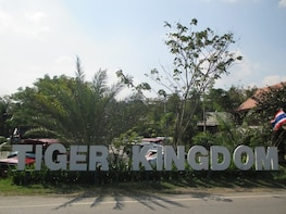 TIGER KINGDOM PHUKET MEDIUM TIGER IN PHUKET