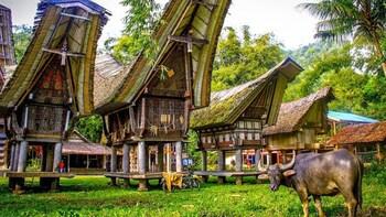 4 Days Tana Toraja Cultural Tour from Makassar
