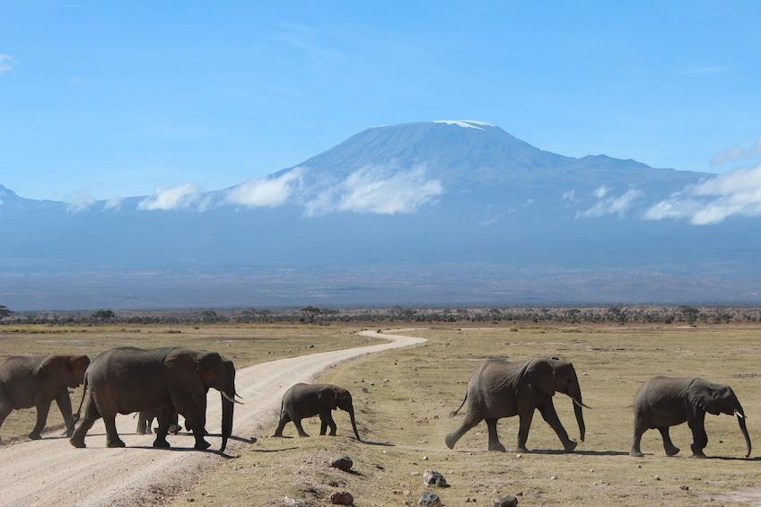 4 Day Marvels of Amboseli Trip