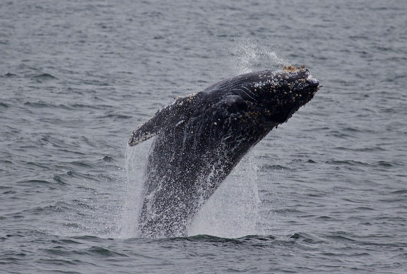 Whale Watching Monterey Bay With Sea Goddess