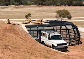 Lions 360 Tour at Monarto Safari Park with entry included