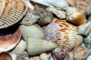 Four Hour Beach Day/ Shelling Adventure Don Pedro State Park