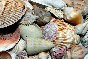 Six Hour Beach Day/Shelling at Cayo Costa State Park