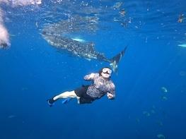 Cebu Whalesharks & Sumilon Journeys