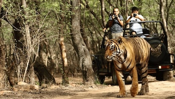 3-Day Ranthambhore Tiger Tour including Agra and Jaipur