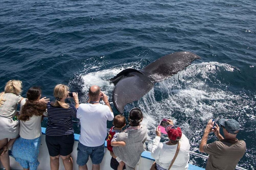 Miches Whale Watching &(Cayo Levantado) Bacardi Island Tour