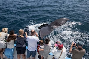 Miches Whale Watching &(Cayo Levantado) Bacardi Island Tour