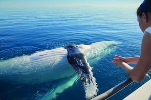 Private Tour Whale Watching + Bacardi Island for 4 people