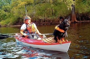 10 Mile Wekiva River Paddle from Wilson's Landing to Highbanks