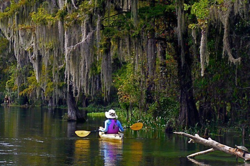 Show item 4 of 8. 10 Mile Wekiva River Paddle from Wilson's Landing to Highbanks