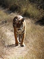 2 Day Mudumalai wildlife heaven from Bangalore