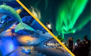 Northern Lights by Boat with a Backup Plan