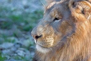 Austin Zoo - General Admission
