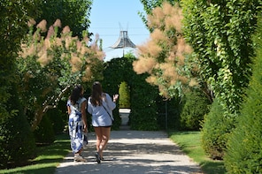 Vineyard, Garden and Luberon Villages with lunch