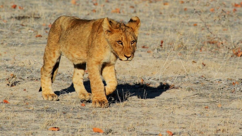 Show item 3 of 3. Etosha NP & Swakopmund Safari 4 Days/ 3 Nights