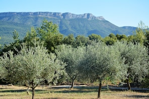 Gourmet Provence : Wine and Olive oil