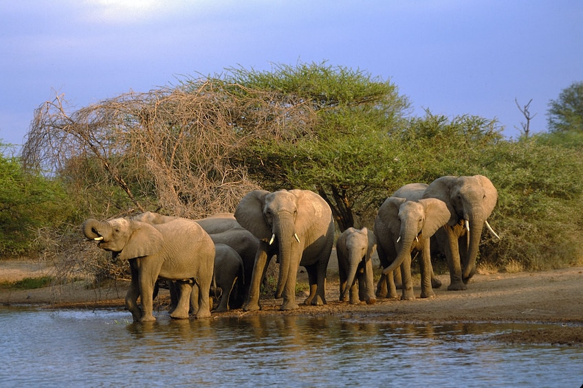 Show item 3 of 7. Kruger National Park Full-Day Game Drive
