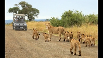 Kruger National Park Full-Day Game Drive