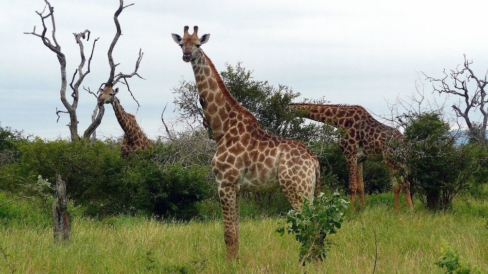 Show item 5 of 7. Kruger National Park Full-Day Game Drive