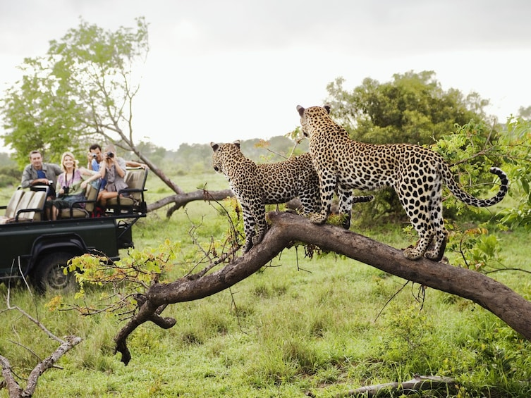 Show item 2 of 7. Kruger National Park Full-Day Game Drive