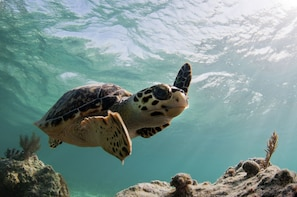 Beach Break, Rum Cakes and Cayman Turtle Centre Tour
