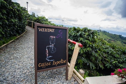 Coffee Tour at Hacienda San Alberto