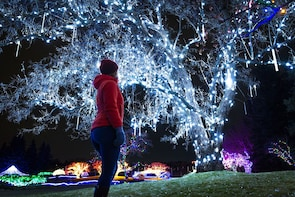 Winter Light Festival - Regular Admission