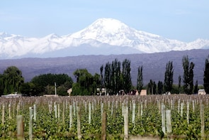 North Uco valley wine tour. Visit 3 wineries and enjoy lunch