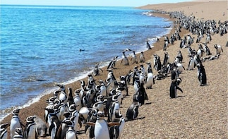 Sighting Penguins with Valley from Puerto Madryn