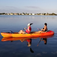 Self Guided Tour of the Lido Mangrove Tunnels (Double Kayak)