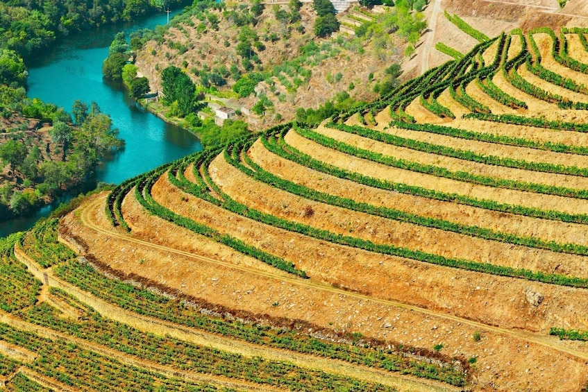 Show item 2 of 9. Douro Valley Tour: Wine Tasting, River Cruise and Lunch