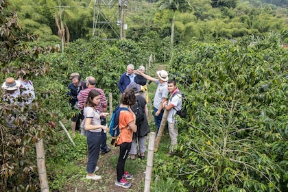 Coffee Tour at Hacienda Venecia