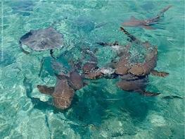 Caye Caulker Marine Reserve Half day tour (Snorkeling)