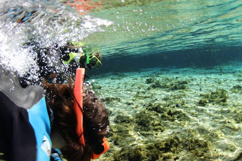 Show item 4 of 10. Alexander Springs Snorkeling