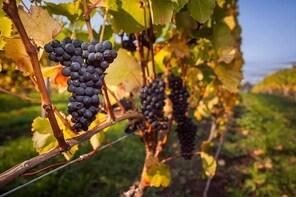Half Day Tamar Valley Wine Tour