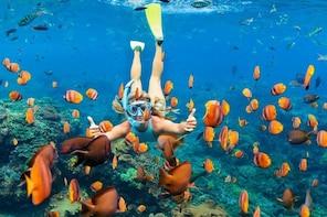 East Nusa Penida Snorkeling Trip from Bali
