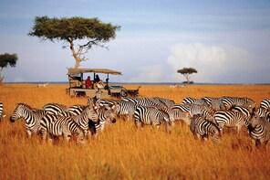 3 Days 2 night ol pejeta Luxury safari