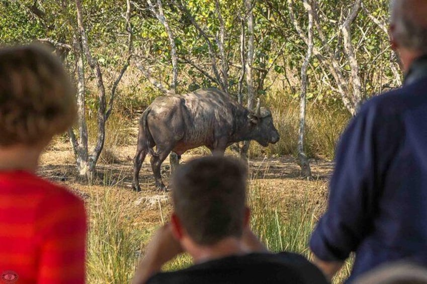 Show item 4 of 6. iSimangaliso Wetland Park, Full Day Tour