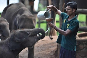 Udawalawe National Park Safari with Elephant Transit Home Visit