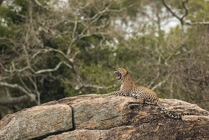 Private Tour : YALA National Park with Experienced Driver/Guide