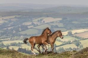 Dartmoor Horse Photography Workshop