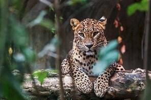 Yala half day safari + beach BBQ (Dinner) + Transfer from Arugambay : Priva...