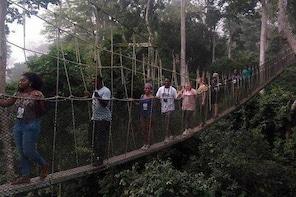 Bonsu Aboretum Canopy, Cocoa Research & Aburi Gardens