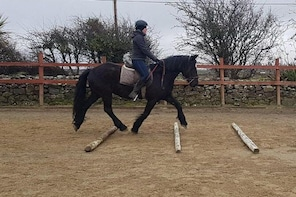 Riding lessons in arena. Moneygold, Co Sligo. Guided. 20 or 45 minute optio...